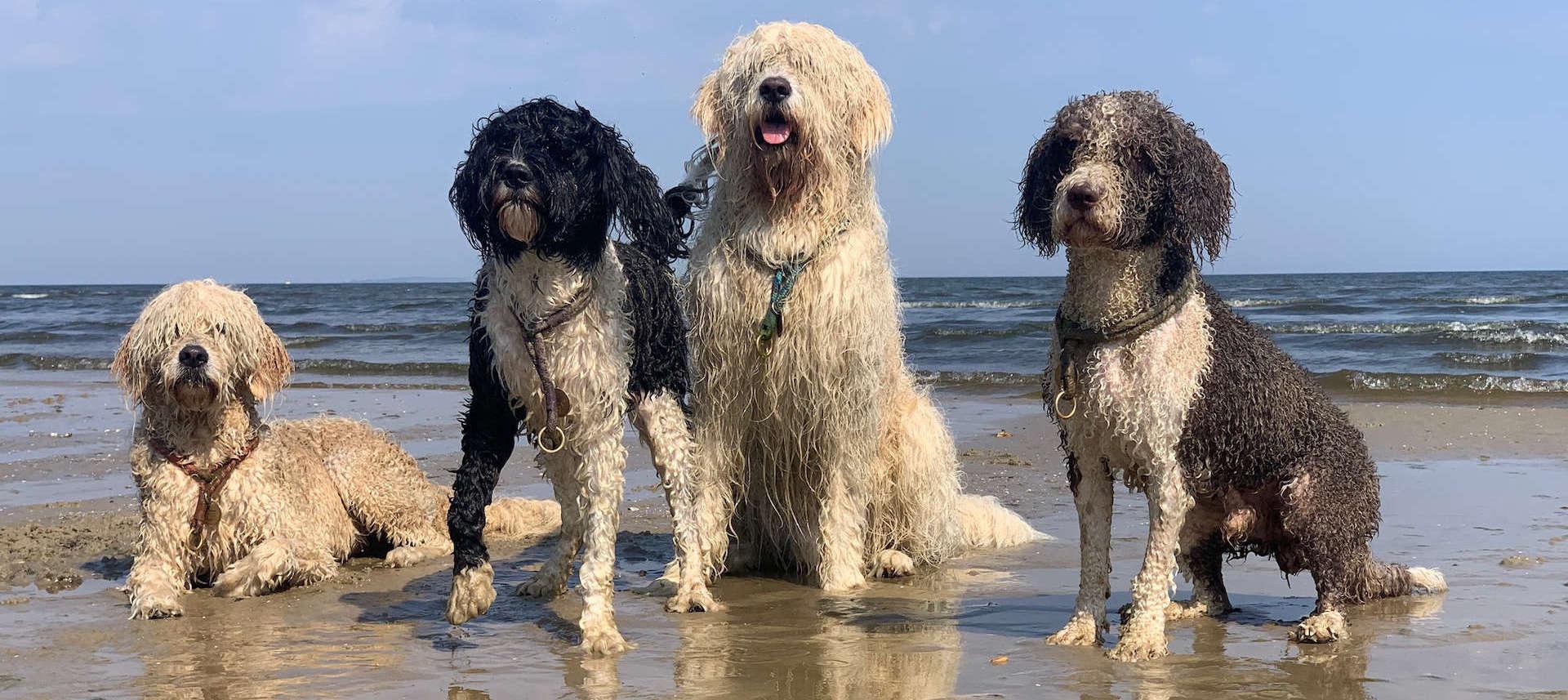 Wasserhunde Rudel